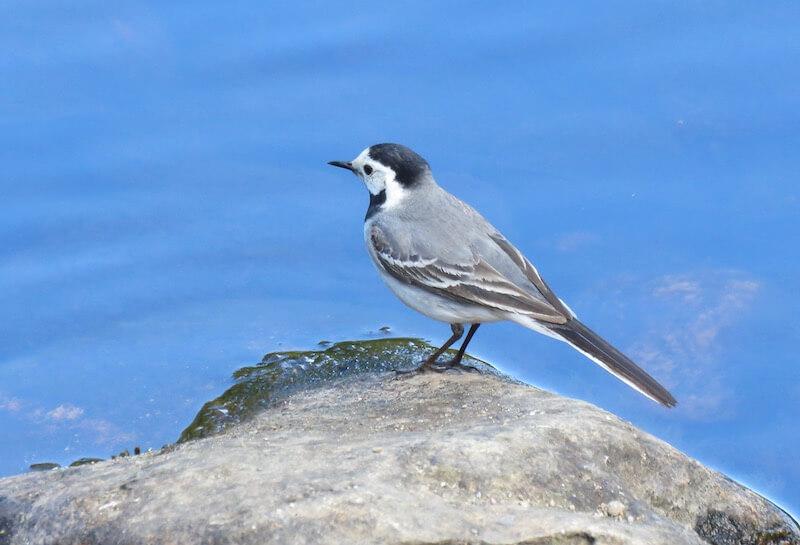 Little Bird here!