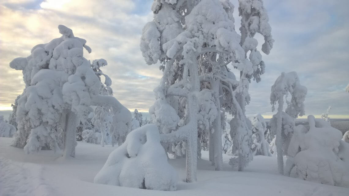 Snow covers firs and makes the landscape magic. So Finnish.